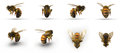 Insect honey bee. Renders set from different angles on a white. 3D illustration Royalty Free Stock Photo