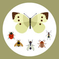 Insect icon flat nature flying butterfly beetle ant and wildlife spider grasshopper or mosquito cockroach