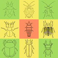 Insect icons set dor beetle and firefly firebug and ant fly and cockroach colorado beetle and mosquito stink bug trilobite Stock Photos