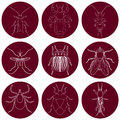 Insect icons set. Earwig and tick, stink bug and cricket, fly and louse, colorado beetle and mosquito, Royalty Free Stock Photo