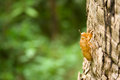 Insect molting by the bark of a tree in a natural grip Royalty Free Stock Images