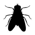 Insect silhouette sticker ground beetle bug carabidae coleoptera vector illustration Stock Photos