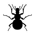 Insect silhouette sticker ground beetle bug carabidae coleoptera vector illustration Stock Photography