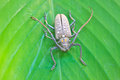Insect from Thailand Royalty Free Stock Photo