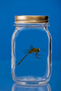 Insect trapped in a jar Royalty Free Stock Photo