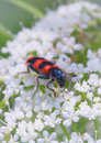 Insecte de red black Photo stock