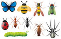 Insectes Photo stock