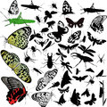 Insects animals butterfly isolated on white background Stock Photography