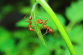 Insects ants are one of the family formicidae we found everywhere Stock Photos