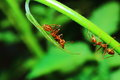 Insects ants are one of the family formicidae we found everywhere Stock Photo
