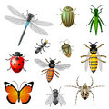 Insects and bugs Stock Image