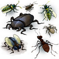 Insects drawing of a few spider ant beetle fly and wasps Stock Image