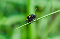 Insects on the grass Royalty Free Stock Photo