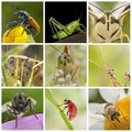 Title: Insects