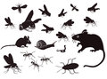 Insects and Rodents Design Royalty Free Stock Photo