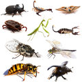 Insects and scorpions in front of white background Royalty Free Stock Photography