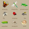 Insects set icons with text Royalty Free Stock Images
