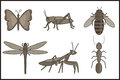 Insects various Royalty Free Stock Images