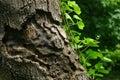 Úleva na strom
