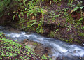 Insenatura della cascata Immagini Stock Libere da Diritti