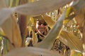Inside the corn maze man with beard goatee and sunglasses peering through stalks in Royalty Free Stock Photos