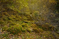 Inside of the deep forest landscape Royalty Free Stock Photo