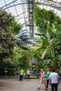 Inside jungle - botani garden, Washington DC Royalty Free Stock Photo