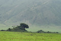 Inside Ngorongoro crater in Tanzania Royalty Free Stock Photo