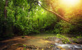 Inside in rainforest jungle with tropical plants and sun light Royalty Free Stock Photo