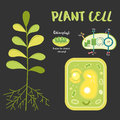 Inside theplant cell Royalty Free Stock Photo