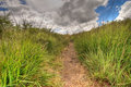 Inside a wild path Royalty Free Stock Image