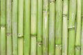Inspirational natural green bamboo background creating a zen scene with an empty copy space for editor s text Royalty Free Stock Photo