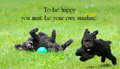 Inspirational quote about happiness by c e jerningham with two adorable poodles enjoying life to the fullest Royalty Free Stock Images
