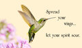 Inspirational quote on life with a beautiful ruby throated hummingbird in motion in the garden Royalty Free Stock Photography