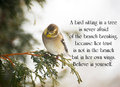 Inspirational quote on life with a pretty goldfinch perched on a branch in winter Stock Photos