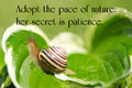 Inspirational quote on nature by ralph waldo emerson on a closeup image of a little snail gently making its way through life Stock Photography