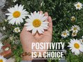 Inspirational quote - Positivity is a choice. With young woman hand holding white daisy flower blossom in hand background. Royalty Free Stock Photo