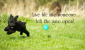 Inspirational quote words live life like someone left the gate open with an adorable toy poodle enjoying life to the fullest Stock Photo