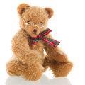 Intelligent bear isolated over white background stuffed with glasses Royalty Free Stock Photography