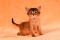 Interested kitten Royalty Free Stock Photo