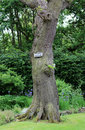 An interesting looking tree with a keep off sign on it private nailed into the trunk this is the edge of well known park in Royalty Free Stock Photo
