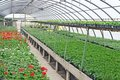 Interior of a greenhouse for growing flowers and plants protected Stock Images