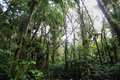 Interior of humid cloudforest between antisana and sumaco reserve ecuador Royalty Free Stock Photography