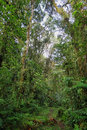 Interior of humid cloudforest between antisana and sumaco reserve ecuador Royalty Free Stock Photo