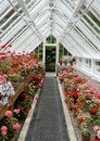 Interior Of A Traditional Greenhouse Royalty Free Stock Photo