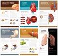 Internal human organs chart diagram infographic. Vector brochure template