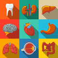 Internal human organs flat long shadow icons set