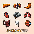 Internal human organs handdrawn icons set with - heart, brains, lungs, liver, kidneys, intestine, eye, teeth, stomach