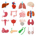 Internal organs cartoon icons