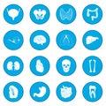 Internal organs icon blue